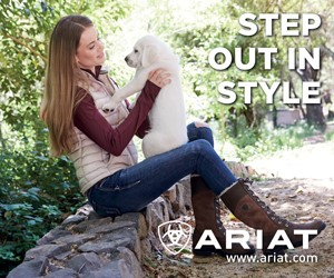 Ariat B (South Wales Horse)