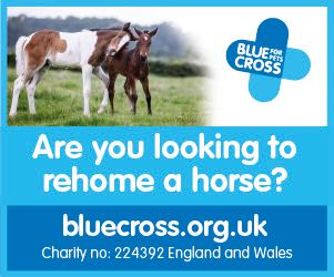 Blue Cross 2020 B (South Wales Horse)